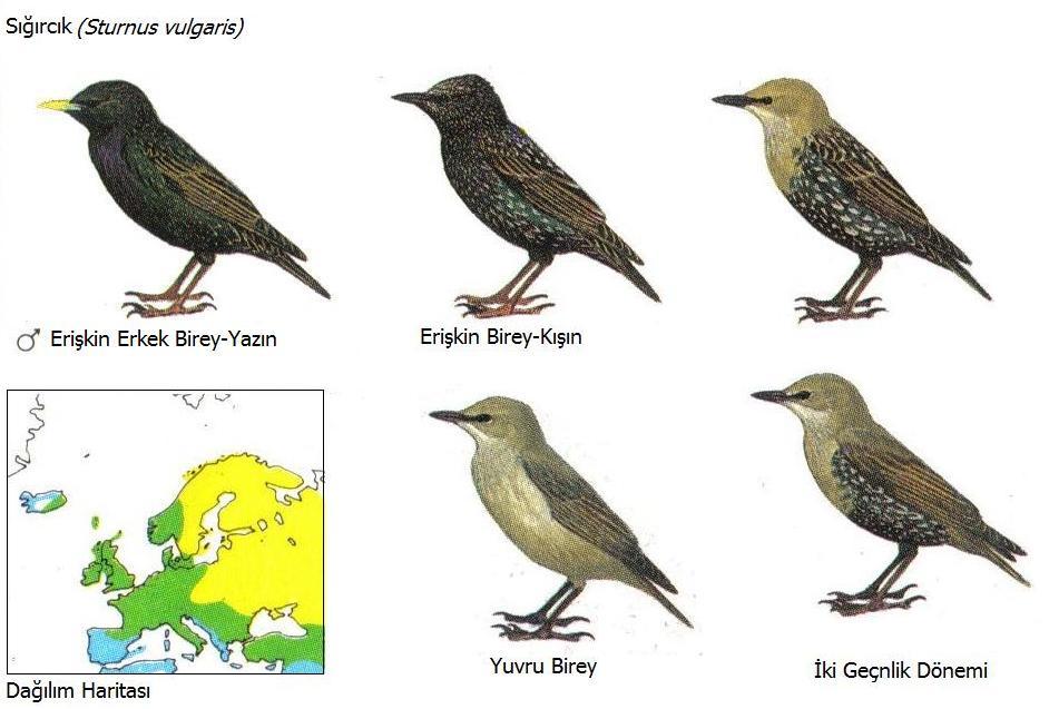 Ornitoloji arazi rehberi