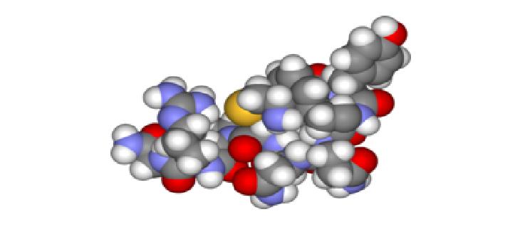 Vasopressin ve Antidiüretik Hormon (ADH)