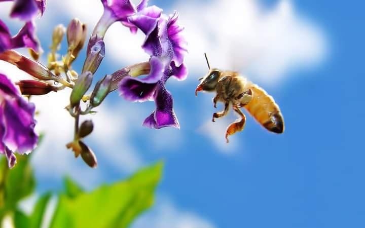 Mantarlar Bal Arılarının Hayatını Nasıl Kurtarabilir