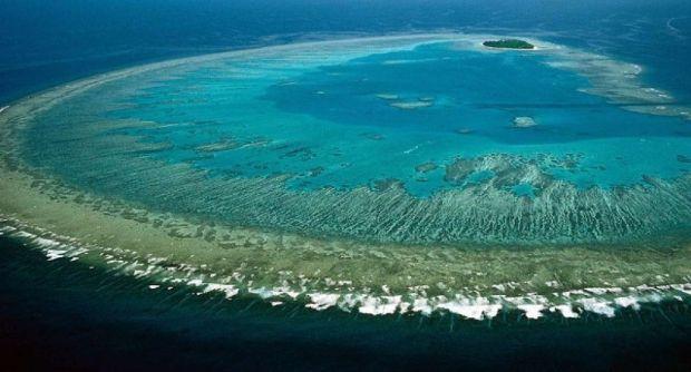 İklim değişikliği sebebiyle hızla yok olan Büyük Set Resifi'ni su altı drone'u koruyacak