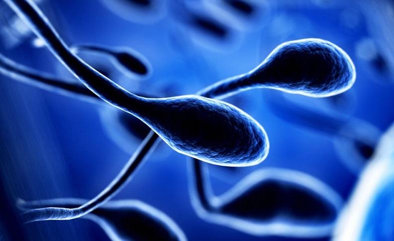 Sperm Döngüsü Nedir ? Sperm hücrelerine ait bazı özellikler nelerdir ?