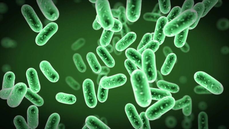 Bağ dokusu proteini, bakteriyel enfeksiyonlarla mücadelede bağışıklık tepkisini teşvik ediyor