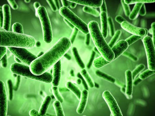 Bakterilerde Hücresel yapı - Mikoloji