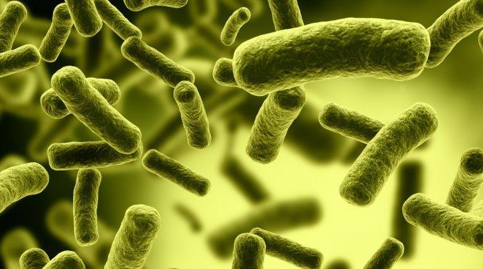 Mikrobiyoloji'nin Tarihçesi