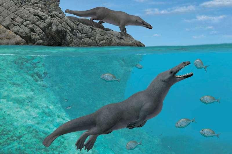 Dört Ayaklı Balina Fosili Bulundu