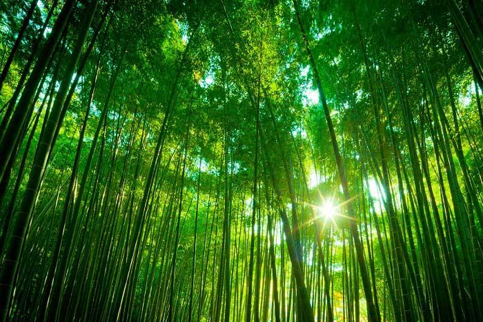 Dünyanın en hızlı büyüyen bitkisi hakkında bilginiz varmı?