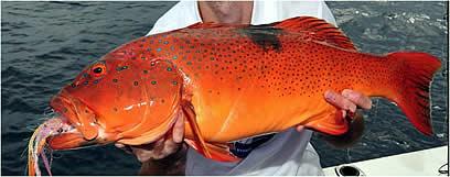 İngiliz bilim adamları balık türünde deri kanserini keşfetti.