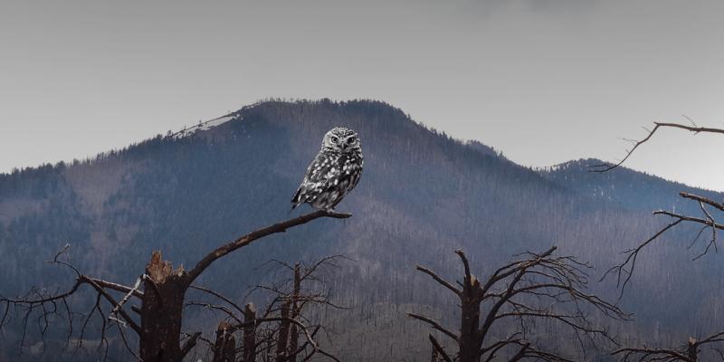 WWF-Türkiye'den uyarı: Tehlikedeki tür sayısı 10 yılda dört kat arttı