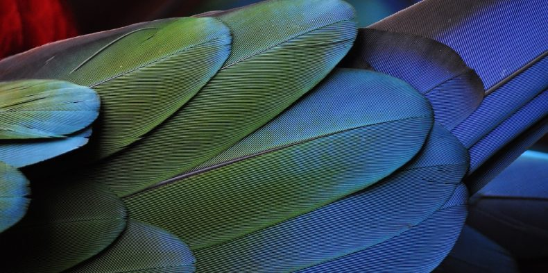 Bilinmesi Gereken 25 Çarpıcı Güzel Kuş Türü !