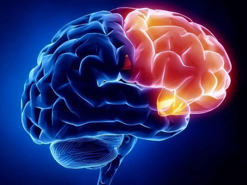 İnsan beyni, kuyruksuz maymunların beyninden daha büyük hale nasıl geldi?