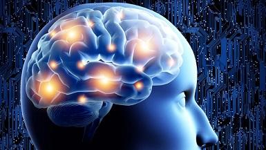 Orta beyin - Mesencephalon Nedir
