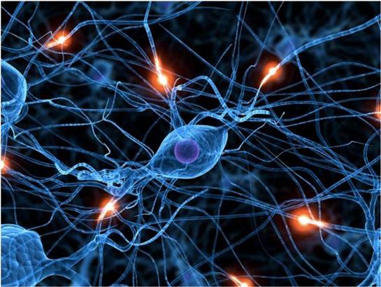 Nörofizyolojik kuramlar