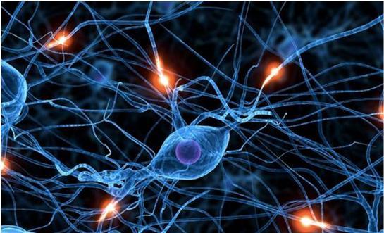 Sempatik sinir sisteminin nedir