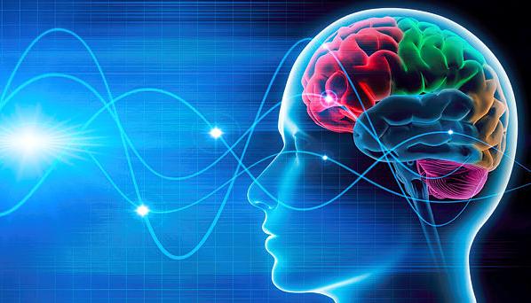 Beyin hücreleri hasara nasıl yanıt verir?