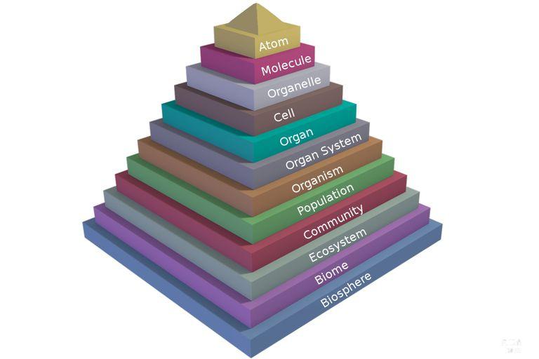 Yaşam Piramidi Nedir ?
