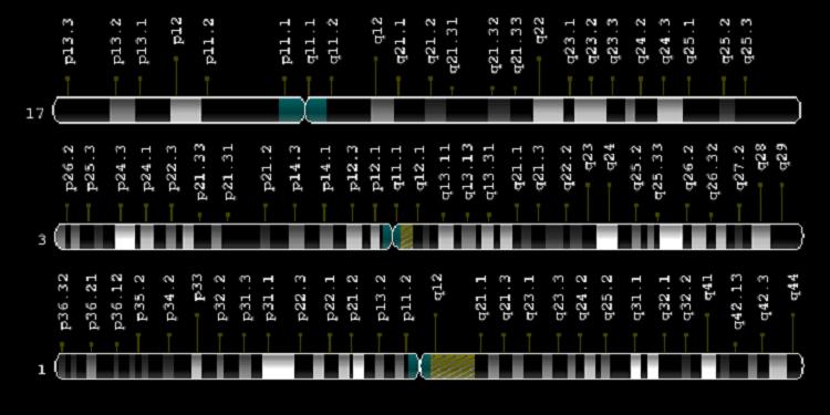 Bir Gen Ailesine Genel Bir Bakış: p53