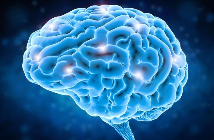 Beyin Doku Plastisitesi: İnsan Beyninin Protein Sentezi Oranları.