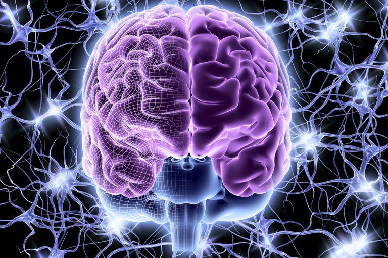 Beynin Temel Parçaları ve Sorumlulukları