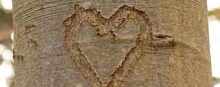 Sevginizi Gösterirken Ağaçlara Zarar Vermeyin!