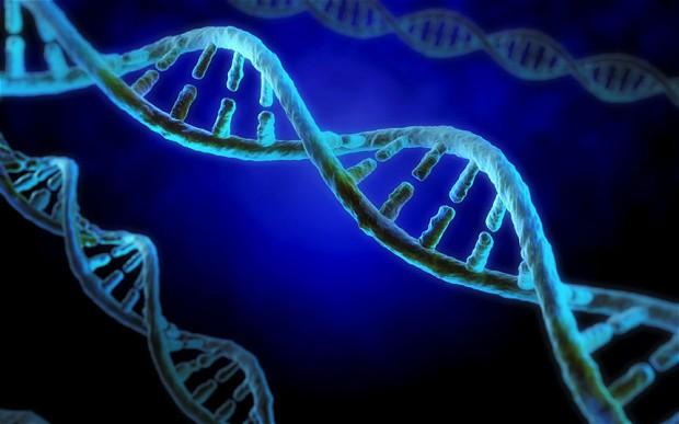 Yeni Çalışma Replikasyon Çatısında DNA Helikazının Yapısını Ortaya Koyuyor.
