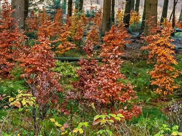 Gelecek orman modellerimiz nasıl olmalı?