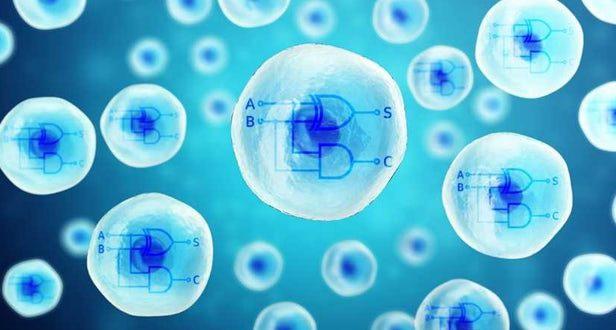 CRISPR ile İnsan Hücrelerine Çift Çekirdekli İşlemci Yerleştirildi