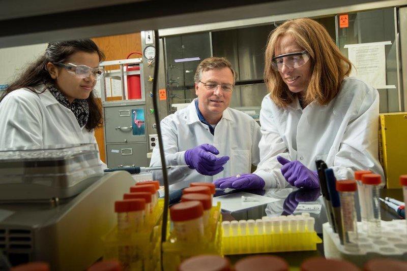 Araştırmacılar, 55 iskeletin biyolojik cinsiyetini tahmin etmek için kullanılan diş minesine ait proteine dayalı yeni bir yöntem geliştirdi. C: Karin Higgins / UC Davis