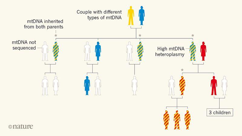Mitokondriyal DNA, sadece annelerden değil babalardan da alınabilir.