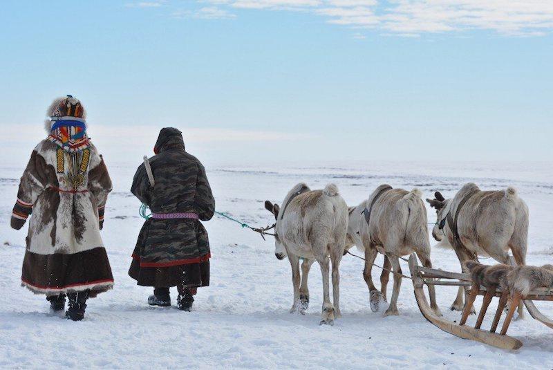 Kuzey Sibirya'daki Nenets halkı ile yakın bir işbirliği içinde çalışan arkeologlar, Kuzey Kutbu tundrasında bulunan 2000 yıllık eserlerin muhtemelen kızakları çekmek için ren geyiği yetiştirmekte kullanılan koşum takımları olduğunu belirledi. C: Robert Lo