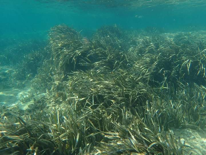 Deniz Eriştelerini Neden Korumalıyız