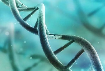 DNA Dizilimi Nasıl Yapılır?