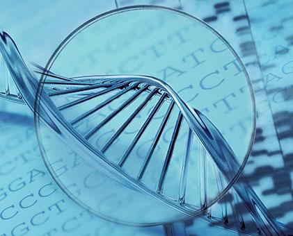 Genetik Çeşitlilik