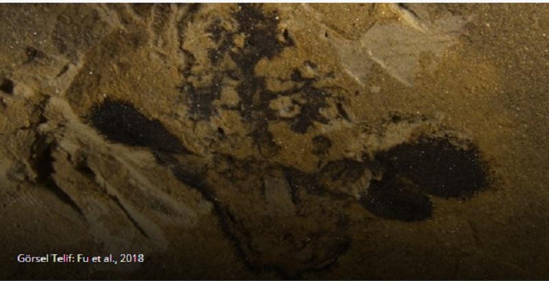 Çiçekler, Bilinenden 50 Milyon Yıl Daha Önce Ortaya Çıktı