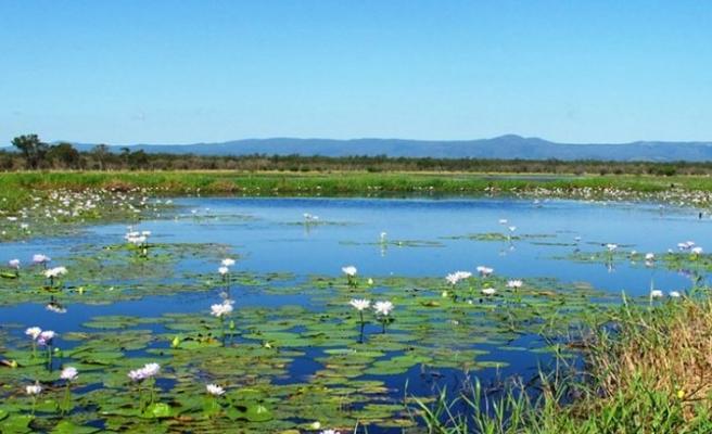 WWF: İklim değişikliği karşısında sulak alanlarımızı korumak zorundayız