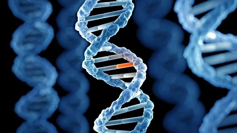 Biyolojide Mutajen Ne Anlama Gelir ? Mutajen Nedir ?
