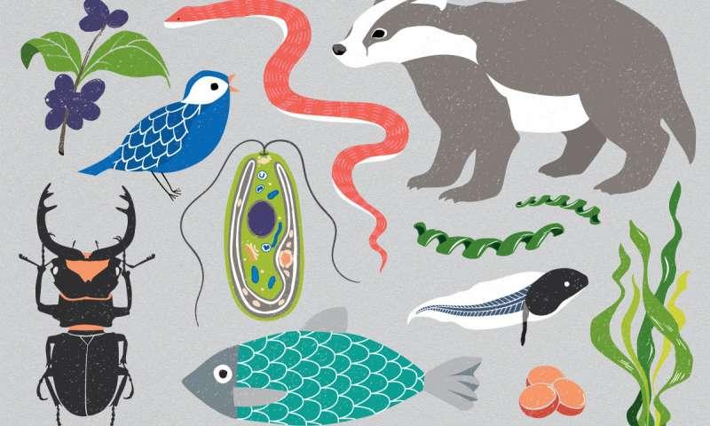 Dünya BioGenom Projesi, Yeryüzündeki tüm karmaşık yaşamların DNA dizisini çıkartmayı hedefliyor