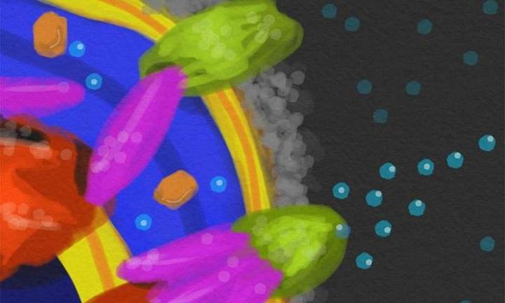 E. coli'nin Savunma Sırrı Ortaya Çıktı