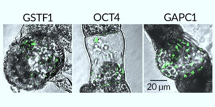 Görsel: C. Cai et al/Current Bio