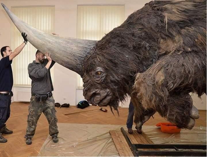 Sibiryanın tek boynuzlu atı - Elasmotherium sibericum
