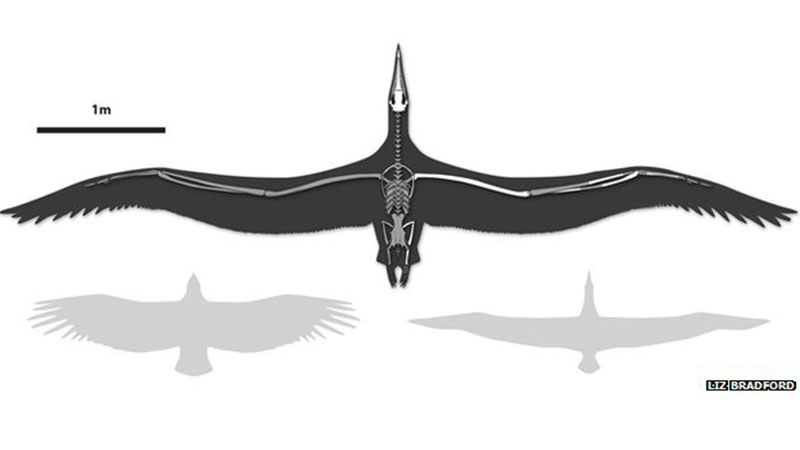 Yaşamış en büyük kuş