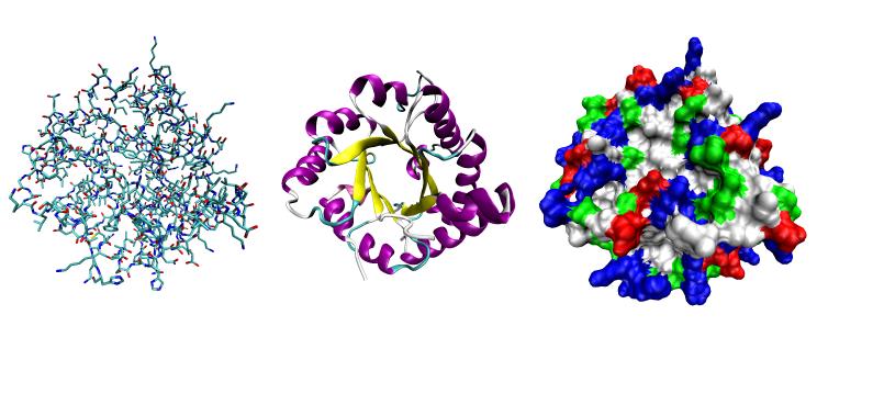 Enzim Reaksiyonlarının Hızına Etki Eden Faktörler - Biyokimya