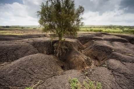 Topraklarımızın Baş Düşmanı Erozyon ve Erozyondan Korunma Yolları Nelerdir?
