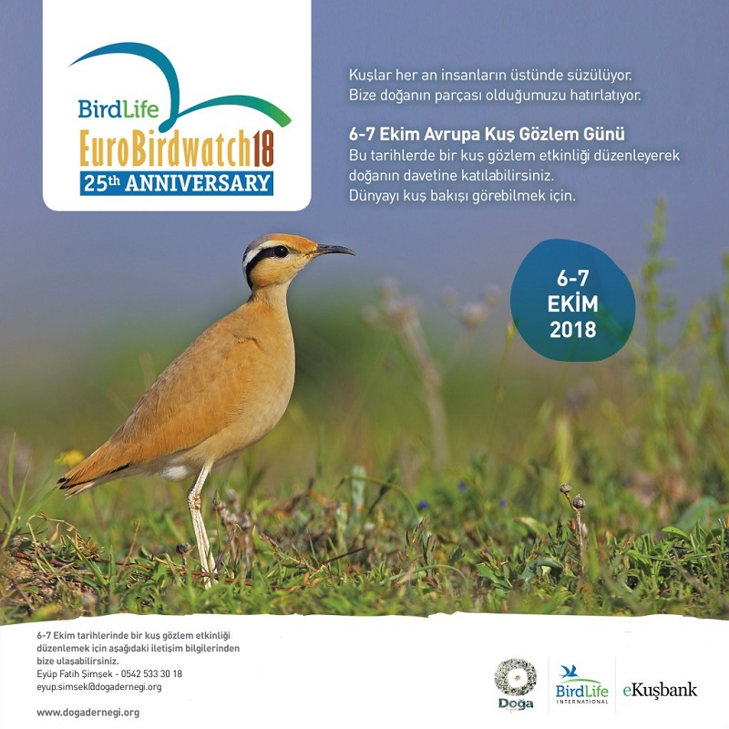 Avrupa Kuş Gözlem Günü