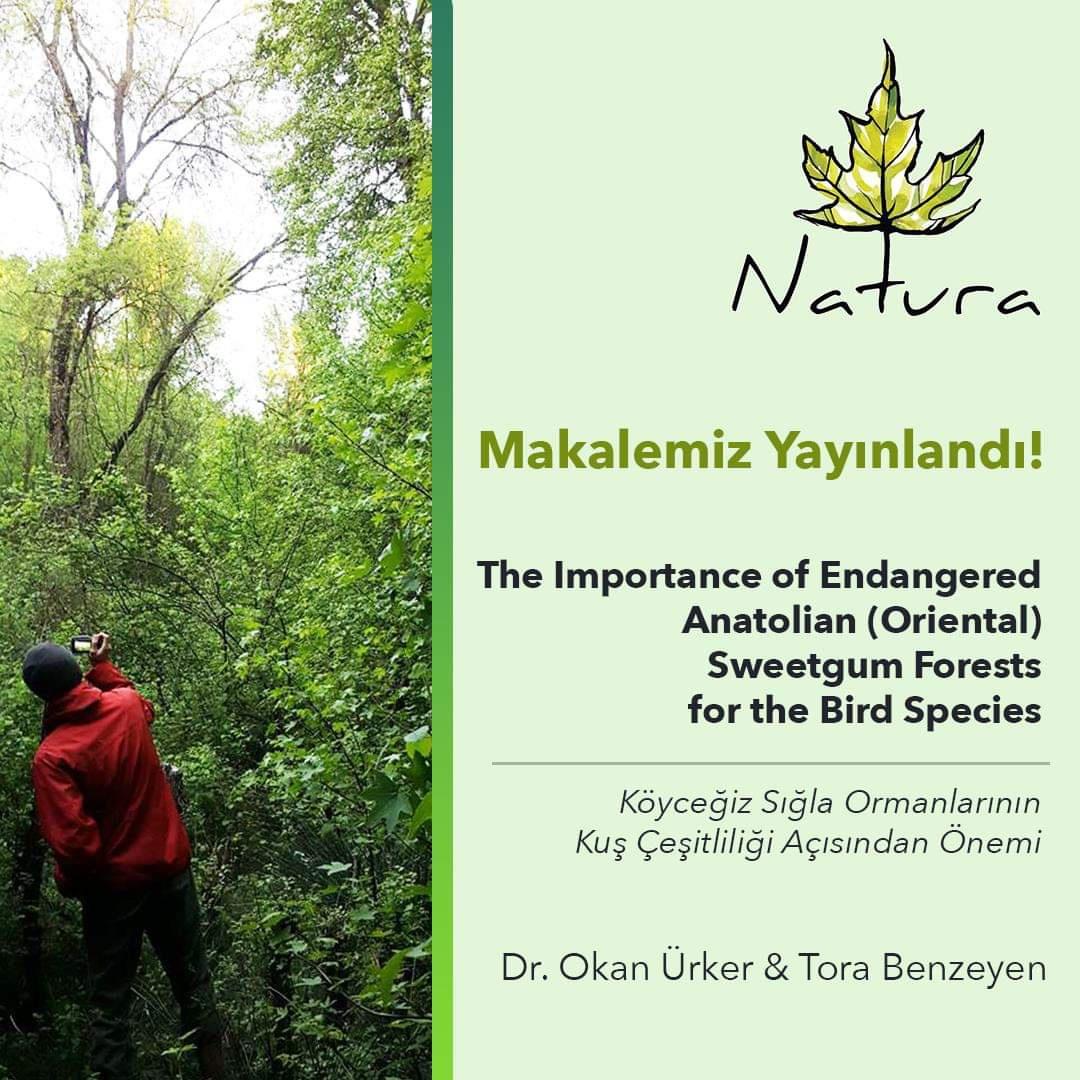 Köyceğiz Sığla Ormanlarının Kuş Çeşitliliği Açısından Önemi