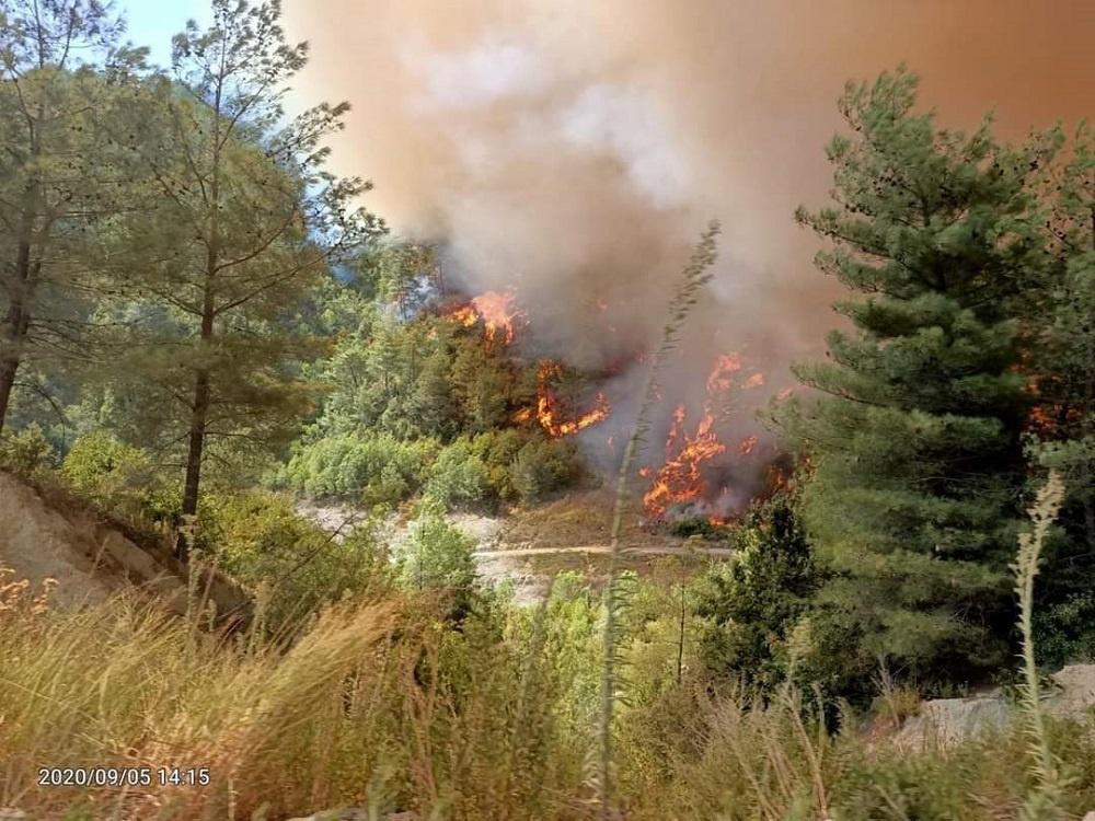 Ormanlar Gibi Biz De Yangınla Yaşamaya Uyum Sağlamalıyız!!!