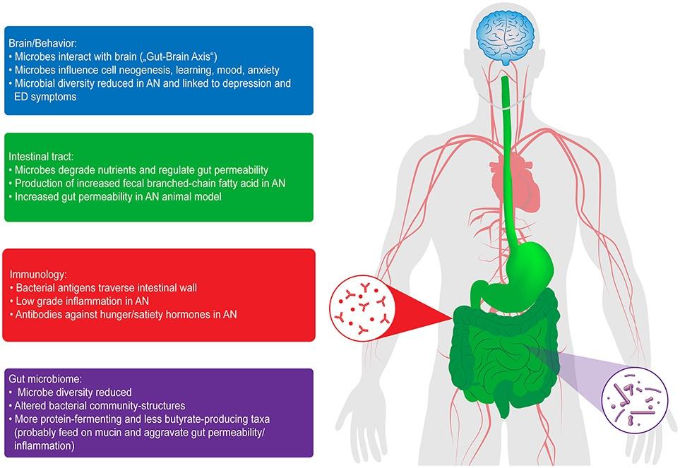 Açlık Anoreksiya Nervoza'da Mikrobiyom ve Gut-Beyin Etkileşimi Üzerine Etkisi