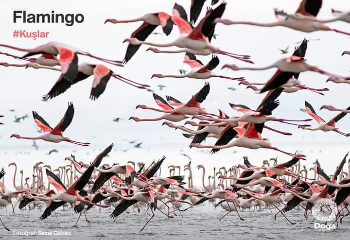 Flamingolar