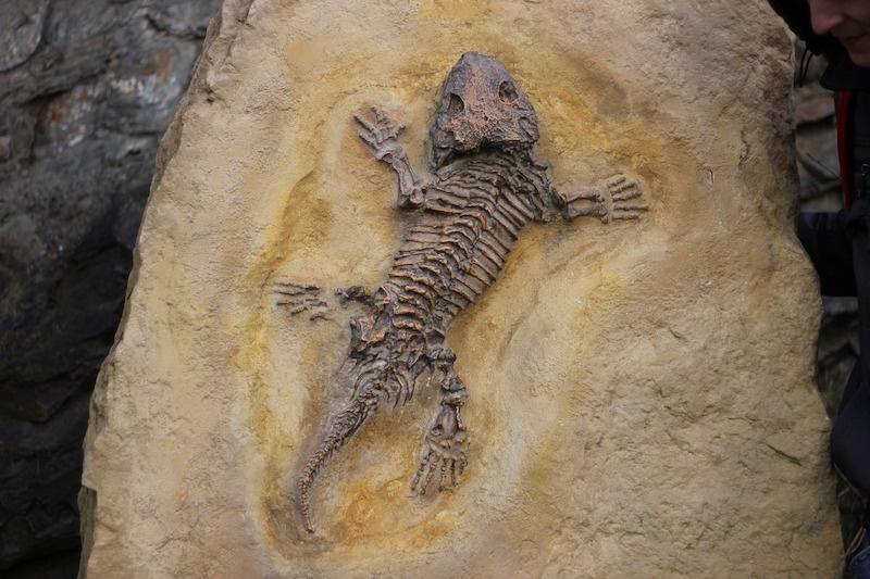Fosillerin Yaşını Nasıl Belirliyoruz?