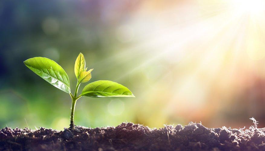 Fotosentez yapan canlılar güneş ışığının ani değişimlerinden korunabiliyor