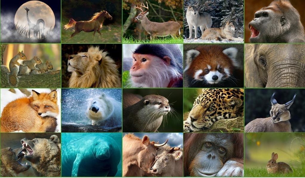 Memeli hayvanların özellikleri nelerdir ?